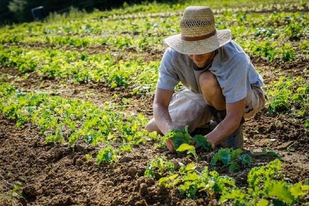 Agricoltura_sociale
