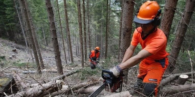 Sulla riforma dei forestali non confondete lucciole per lanterne