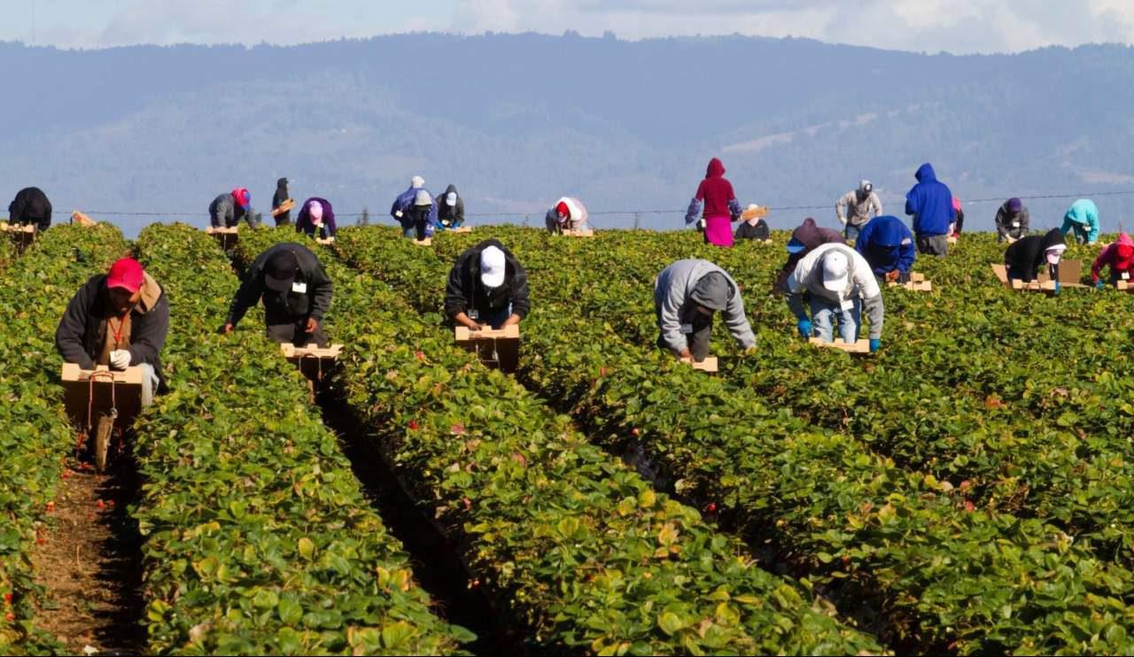 Ripartire dai diritti del lavoro per riformare l'agricoltura. Il 26 maggio in Parlamento l'A.S.S.A. presenta le proposte sui braccianti